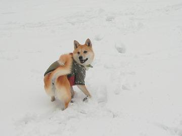 s-snowCIMG7160.jpg