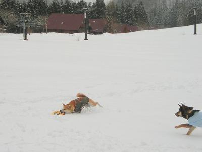 s-snowCIMG7165.jpg