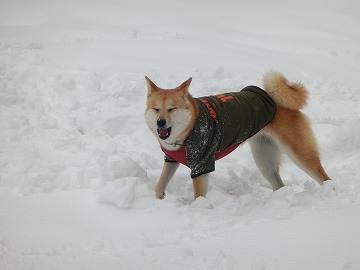 s-snowCIMG7175_20140510005954326.jpg