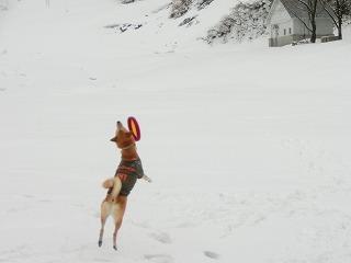 s-snowCIMG7183.jpg