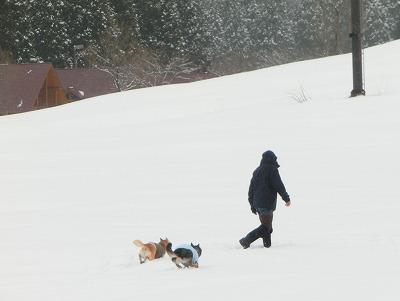 s-snowCIMG7214.jpg