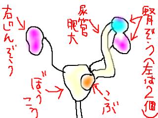 snap_bajiko_2014641455.jpg