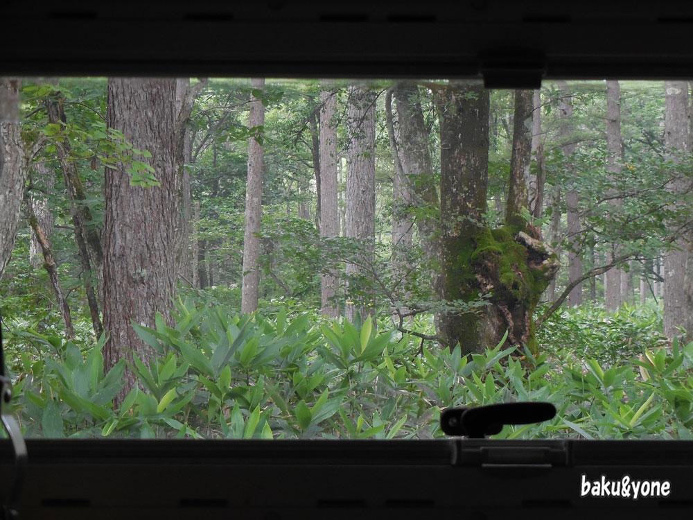 クマでそうな窓の景色02