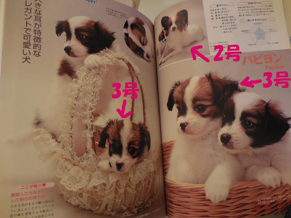 雑誌掲載2010