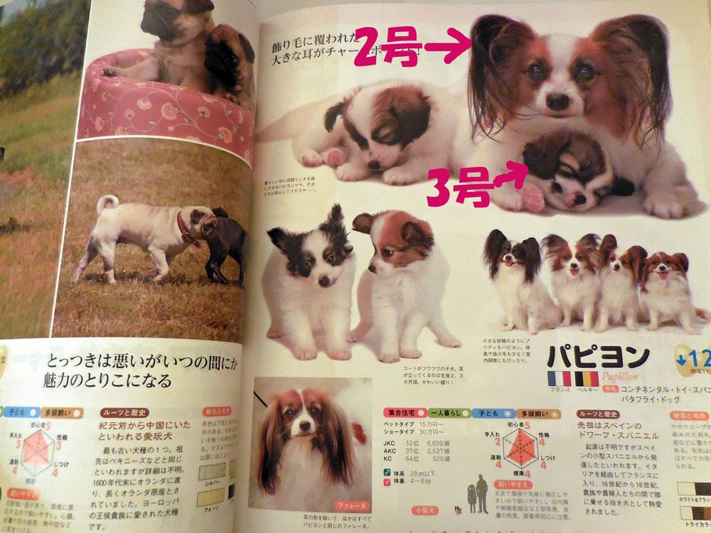 雑誌掲載2014