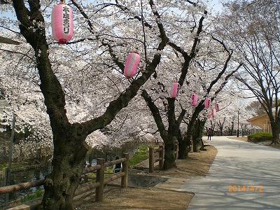 s-桜並木