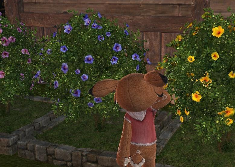 花壇が咲いたよ