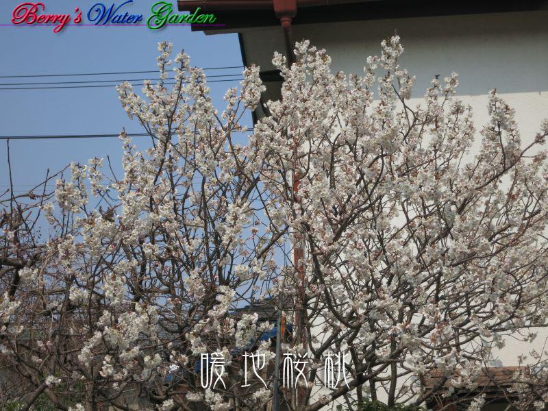 IMG_3688_800 のコピー