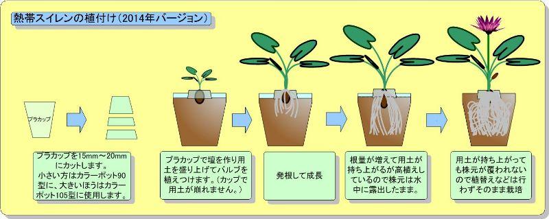 熱帯スイレンの植替え(鉢増し2014)_800