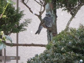 雪と鳥 (3)