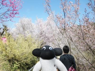 花見山 (4)