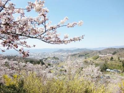 花見山 (5)