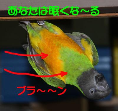 8_コウモリ3
