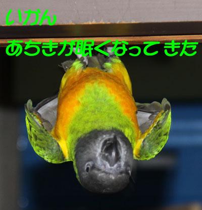 10_コウモリ5