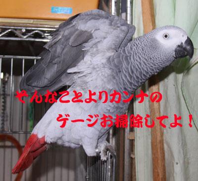 3_カンナお掃除
