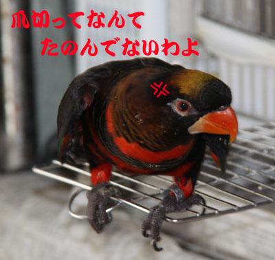 9_ピンナお怒り