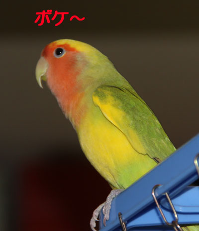 2_リコ2