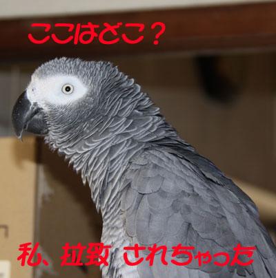 3_カンナ里帰り