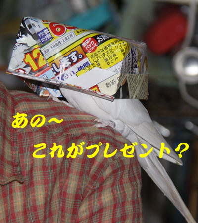 5_プレゼント