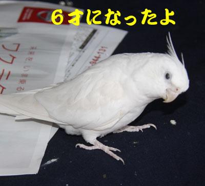 3_アンジュ6才