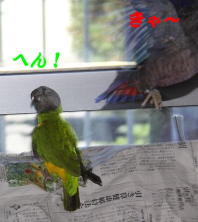 3_ビオ対チャッピ2