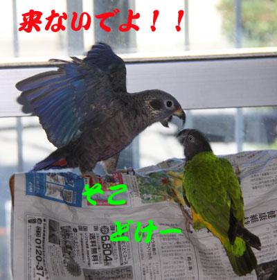 2_ビオ対チャッピ1