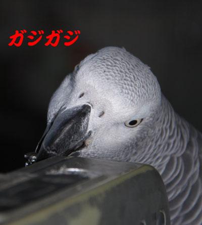8_カンナ格闘1