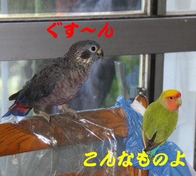 7_ビオ対リコ4