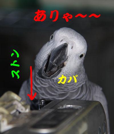 B_カンナ格闘4
