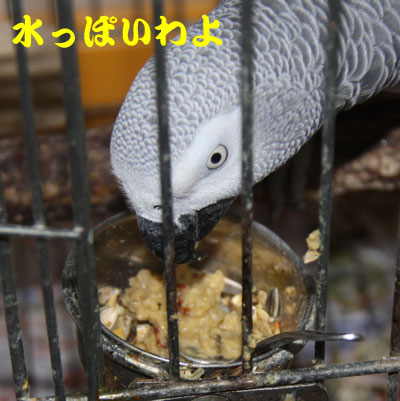 5_カンナ試食3