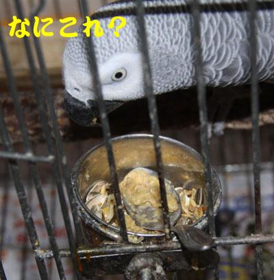 3_カンナ試食1