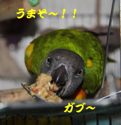 6_チャッピー試食1