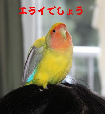 10_リコエライ