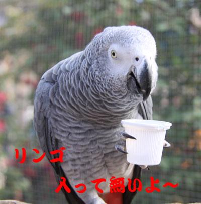 16_ヨウム1