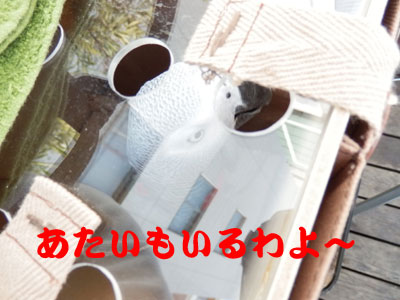 3_エグスンシングス2