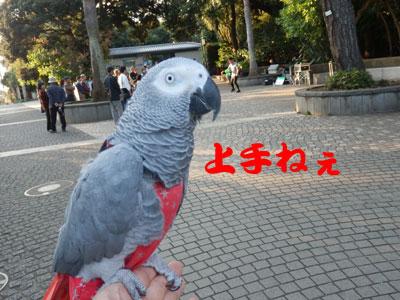 9_江ノ島ジャグリング