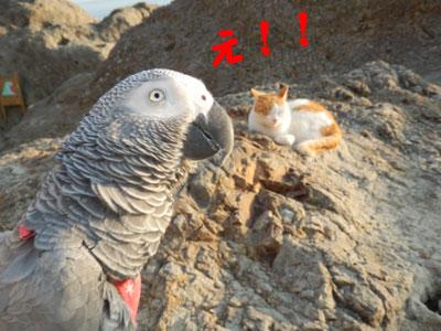 13_江ノ島猫