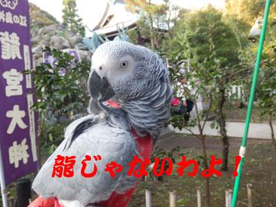 11_竜宮大社