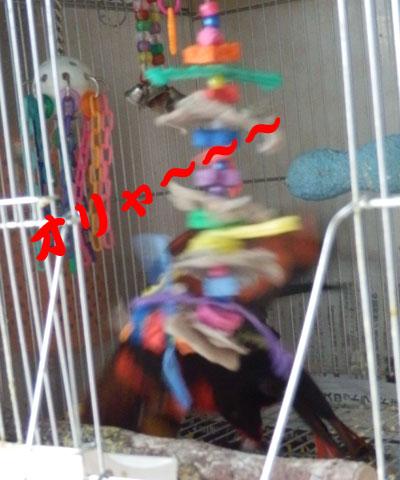 5_ピンナ暴れる2