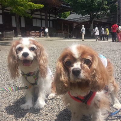 2014-05-22-12-34-01_photo.jpg