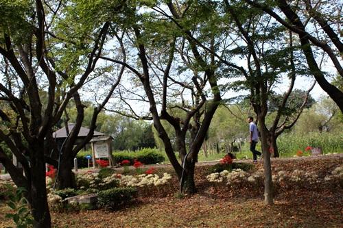 IMG_4820古墳公園