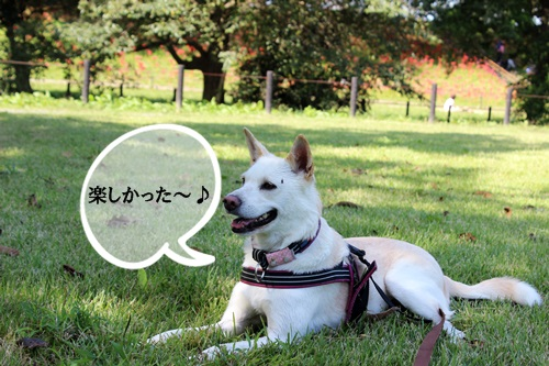 IMG_5047権現堂