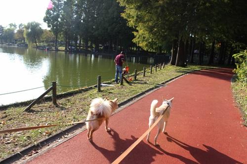 IMG_5496北本公園