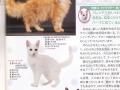 2015猫カタログraparm-2