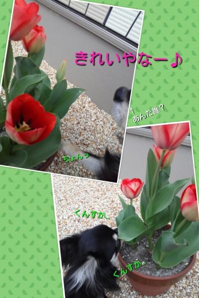 20140402112306fc7.jpg