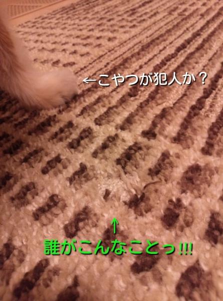 201404191021352df.jpg