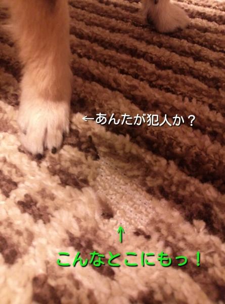 20140419102207c0e.jpg