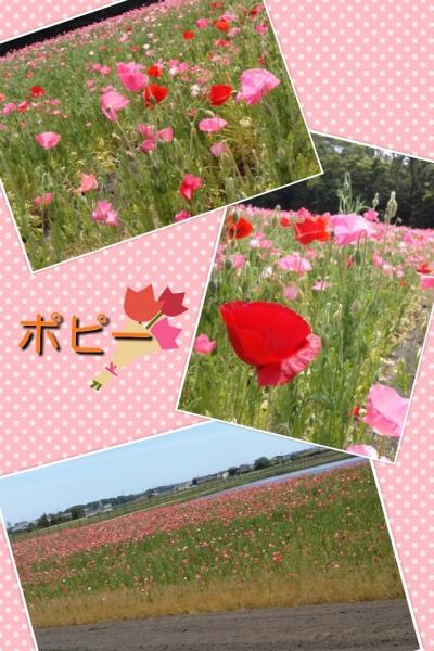 201405192047470ba.jpg