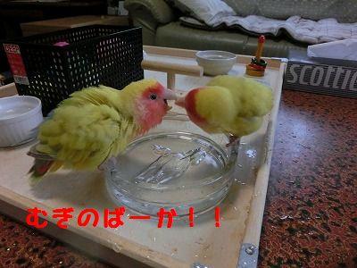 水浴びの陣3