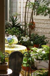 我が家の中庭